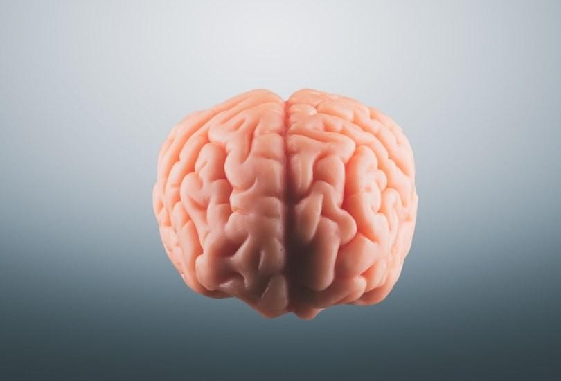 materia gris cerebro bebe que nace en verano