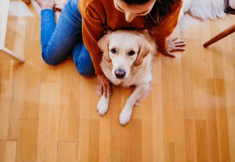 perro y bebe llegada a casa Minutus Bebé